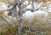Fulufjällets Nationalpark söder om Idre