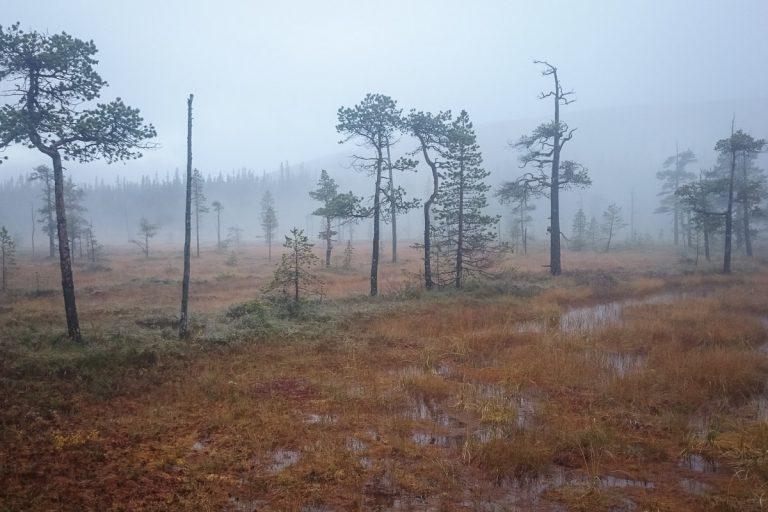 Fulufjället 2015 - Skogsmyr i dimma